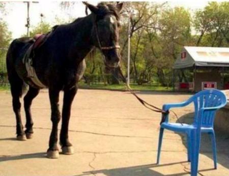 cheval attaché à une chaise en plastique